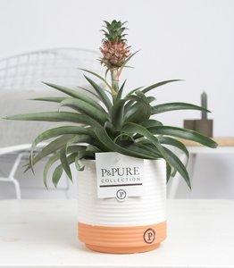 Ananas Mi Amigo kamerplant in sierpot Milou ceramics